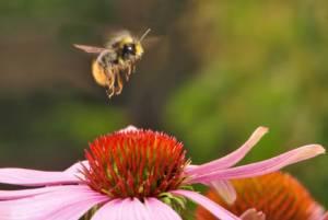 polenizarea